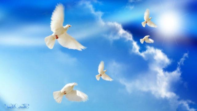 doves-peace-2