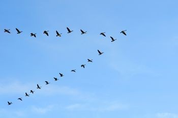 Πετάμε μαζί